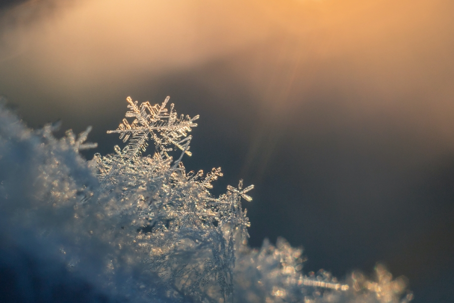 Galushko Semen/Shutterstock